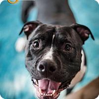 Adopt A Pet :: Titan - Mayer, MN