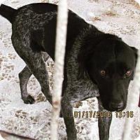 Adopt A Pet :: Quincy - Portland, IN