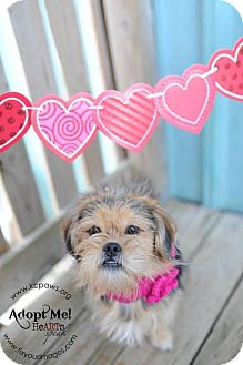 Terrier (Unknown Type, Medium) Mix Dog for adoption in Kansas City, Missouri - Snuggle-upagus