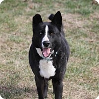 Adopt A Pet :: Bailey - Chatham, VA