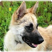 Adopt A Pet :: Princess Diana - Dripping Springs, TX