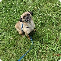 Adopt A Pet :: JuJu - MC KENZIE, TN