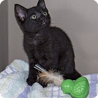 Adopt A Pet :: Mistique - Elmwood Park, NJ