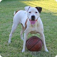 Adopt A Pet :: Stella - Tucson, AZ