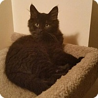 Adopt A Pet :: NJ - Maverick - Blairstown, NJ