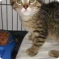 Adopt A Pet :: Bootsy - Rockford, IL