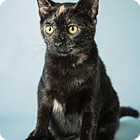 Adopt A Pet :: Tessie - Hendersonville, NC