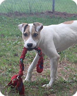 Terrier (Unknown Type, Medium) Mix Dog for adoption in Murphysboro, Illinois - Elana