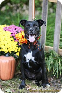 Labrador Retriever Mix Dog for adoption in Fayetteville, Arkansas - Morgana