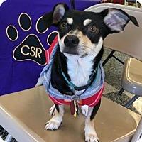 Adopt A Pet :: Dylan - North Richland Hills, TX