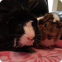 Adopt A Pet :: Fern and Evie - Harleysville, PA