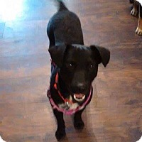 Adopt A Pet :: Bailey-pending adoption - Manchester, CT