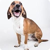 Adopt A Pet :: James Marsden - Jersey City, NJ