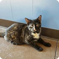 Adopt A Pet :: Kera - Wilmington, OH