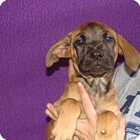 Adopt A Pet :: Vanilla - Oviedo, FL