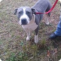 Adopt A Pet :: TRACY - Cliffside Park, NJ
