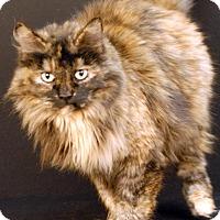 Adopt A Pet :: Squeakers - Newland, NC