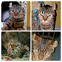 Adopt A Pet :: Babette - Spring Brook, NY