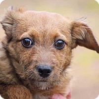 Adopt A Pet :: Debbie - Coopersburg, PA