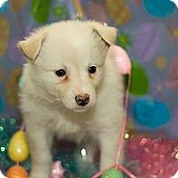 Adopt A Pet :: Ice - Saskatoon, SK