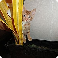 Adopt A Pet :: CURTIS - Phoenix, AZ