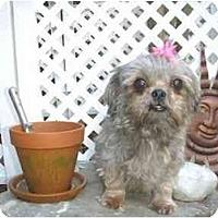 Adopt A Pet :: Ginny - Mooy, AL