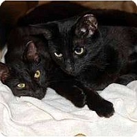 Adopt A Pet :: Zsa Zsa & Liz - New Port Richey, FL