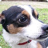 Adopt A Pet :: Tia - Mocksville, NC