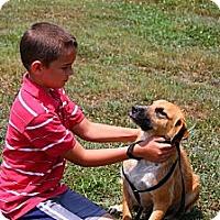 Adopt A Pet :: PollyAnna - Linden, TN