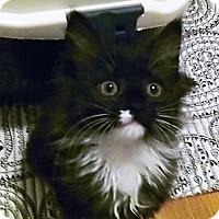 Adopt A Pet :: Shelby - Irvine, CA