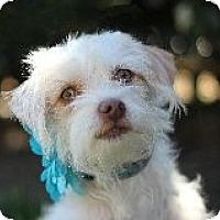 Adopt A Pet :: Tipsy @ Petsmart SLO Sat. - Atascadero, CA