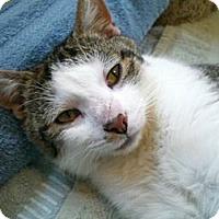 Adopt A Pet :: Katniss - Byron Center, MI