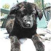 Adopt A Pet :: Clemintine - San Diego, CA