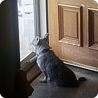 Adopt A Pet :: Pebbles - Homewood, AL