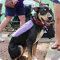 Adopt A Pet :: Louis Armstrong - Atlanta, GA
