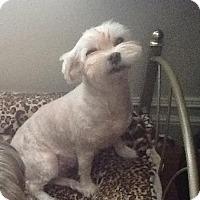 Adopt A Pet :: Lulu - Orange, CA