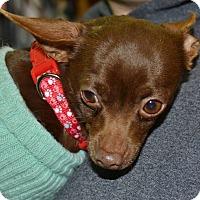 Adopt A Pet :: Truffles - Meridian, ID