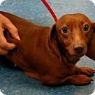 Adopt A Pet :: Armella (Has application)