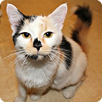Adopt A Pet :: Lola - ADOPTION PENDING! - Jefferson, NC