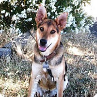 Adopt A Pet :: Raisin - Pleasant Grove, CA
