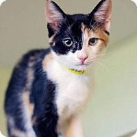 Adopt A Pet :: Miss Molly - Markham, ON