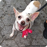 Adopt A Pet :: Lovey! - New York, NY