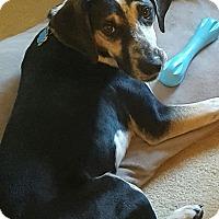 Adopt A Pet :: Dutton - NH - Warren, ME