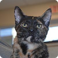 Adopt A Pet :: Marge - Windsor, VA