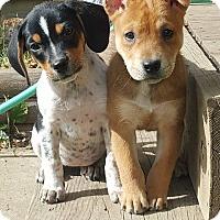 Adopt A Pet :: River - Sawyer, ND