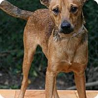 Adopt A Pet :: Peanut - Tomball, TX