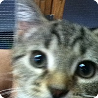 Adopt A Pet :: Spooky - Shippenville, PA