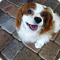 Adopt A Pet :: Sparky (Coral Gables, FL) - Enterprise, FL
