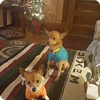 Adopt A Pet :: Tito and Lola - Elyria, OH