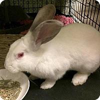 Adopt A Pet :: Bugs - Los Angeles, CA